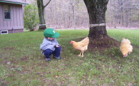 Riley inspects a rented chicken