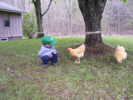 Riley Truog inspects a rented chicken