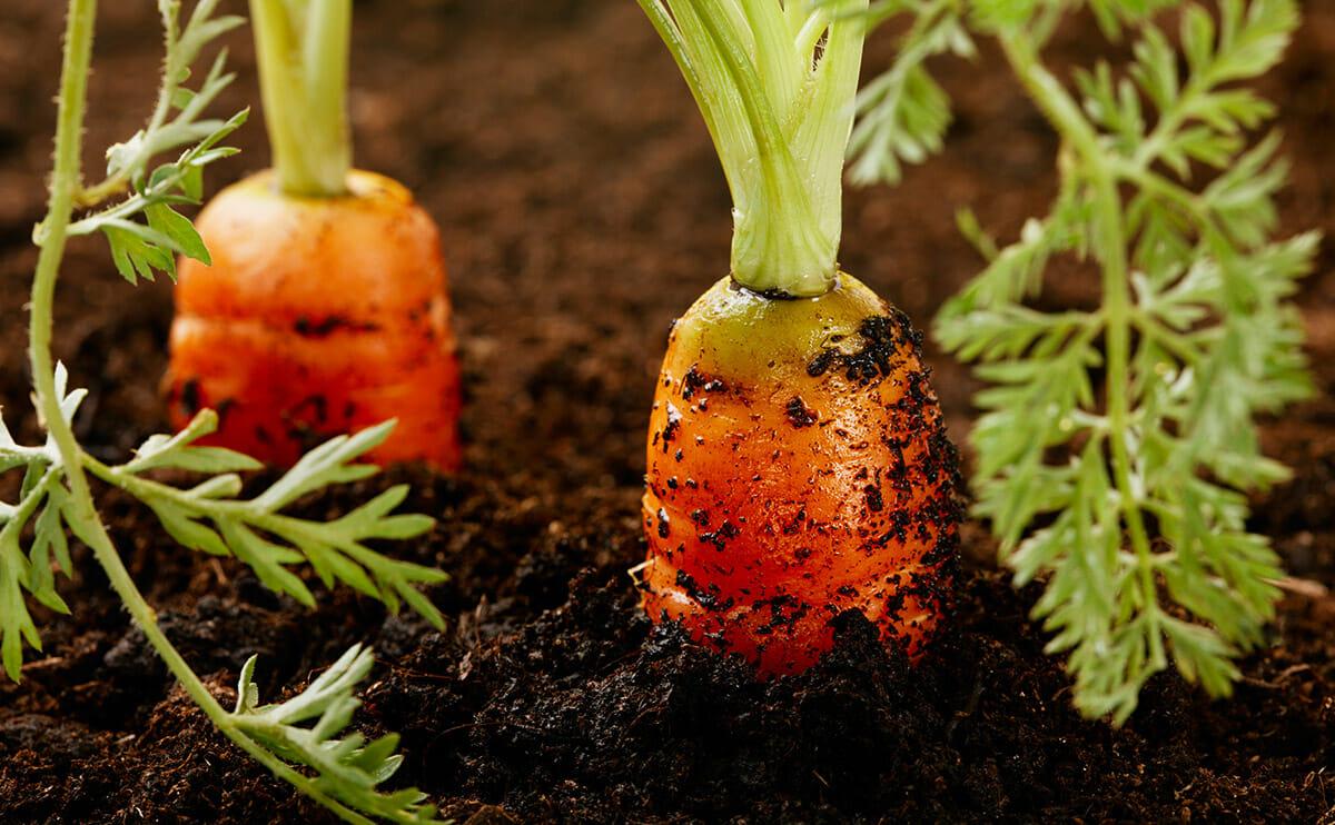 Dear modern farmer is my soil hot or not modern farmer for Soil our life