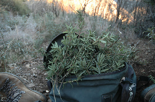 A backpack full of forage.