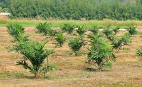 PageLines- palm-oil-plantation.jpg