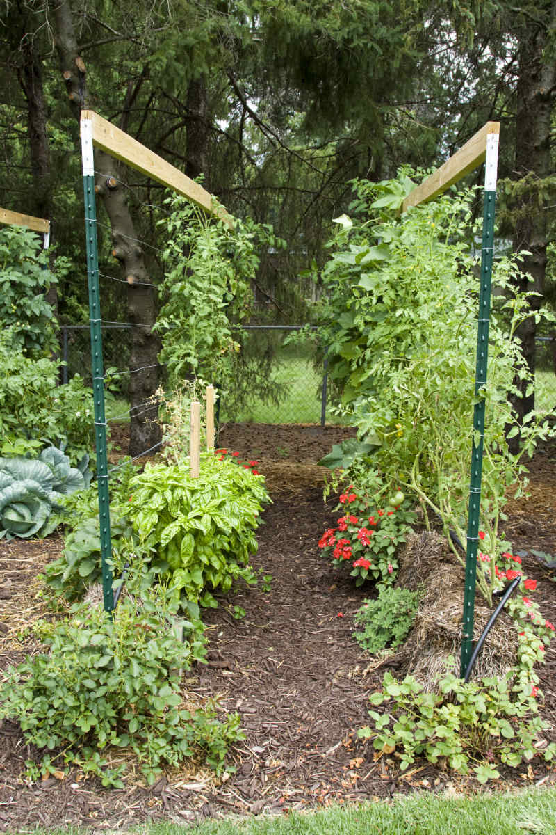 How To Build A Straw Bale Garden Modern Farmer