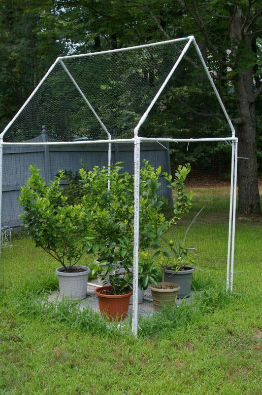 How to Grow Citrus Indoors - Modern Farmer