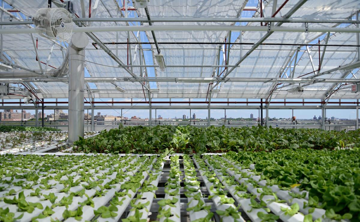 A Hydroponic Rooftop Farm Grows In The Bronx Modern Farmer