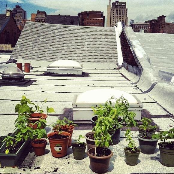 Tiered Contemporary Urban Garden: 7 Modern Farmer Readers' Urban Gardens
