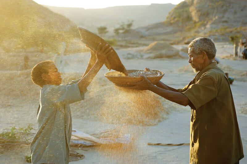 A father and son pass teff grains back and forth, winnowing the chaff from the edible parts.