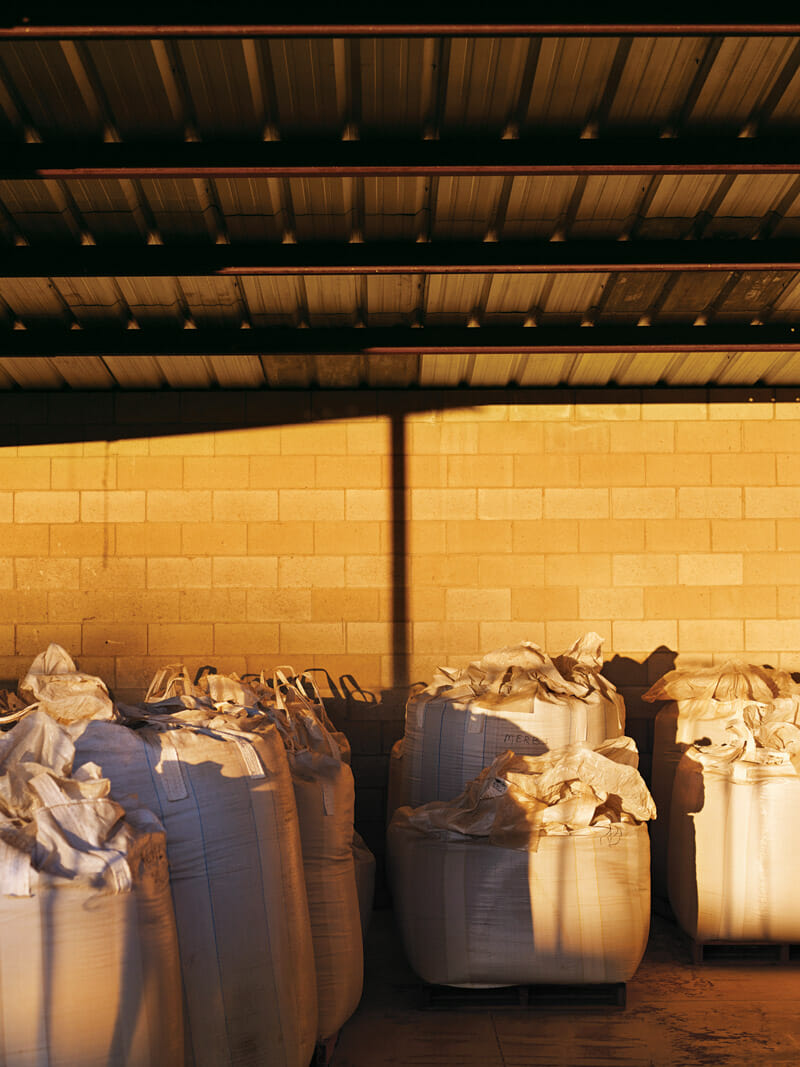 Sacks of teff await cleaning in Nevada.