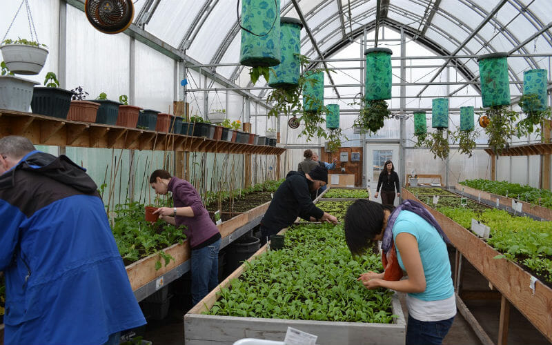 Locals at work in Iqaluit's community greenhouse, where summer temps can still drop below zero.