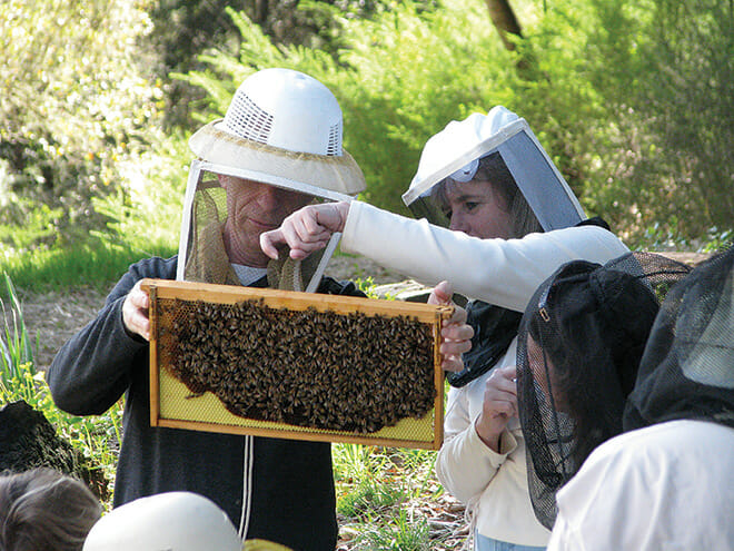 Beekeepers in training, students pull hive frames from a bee box;