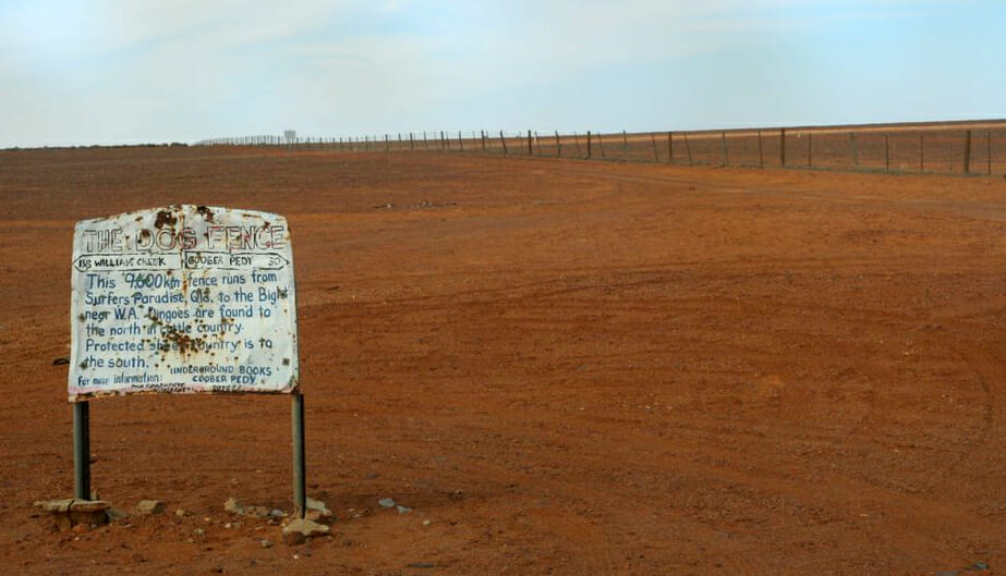 Australia's massive dingo fence was built to protect the flocks of southern Queensland. Via Flickr/Paleontour
