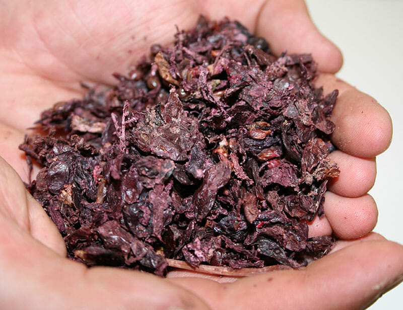 Grape pomace from wineries in Southern Australia. Image courtesy of Wikipedia.