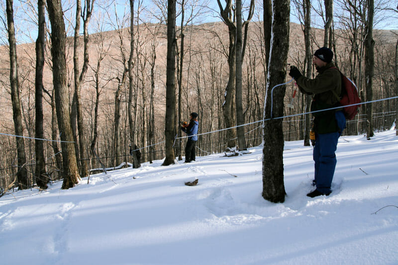 The author and crew member William Burt (foreground), high up in the mountains, tapping trees.