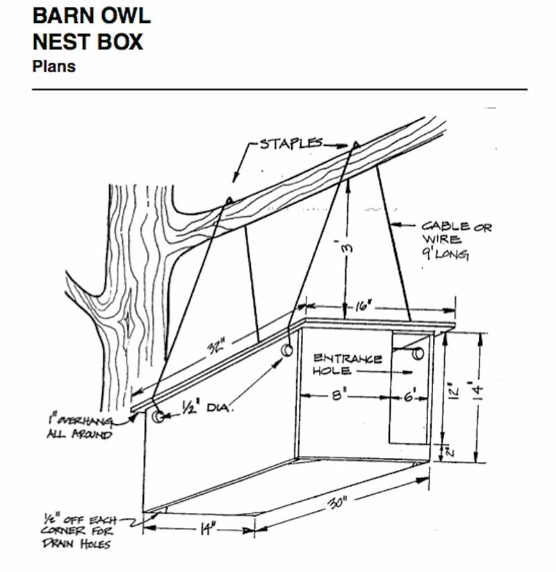 Plans For Building A Barn Owl Box