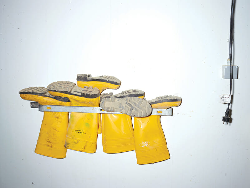 Yellow boots on wall.