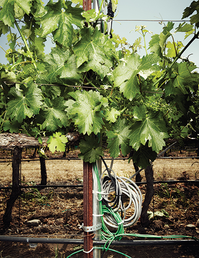 A vine with cables is used to record data in real time.
