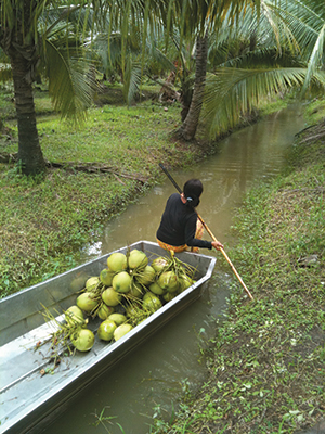 A farmer going to another tree via canal. Boats carry the nuts.