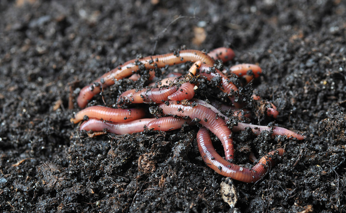 5 ways to collect your own worms for bait video wide for Worms for fishing bait