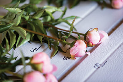 Measuring cut peonies at Chilly Root Farms. Most are cut at arm's length, but some orders call for longer stems.