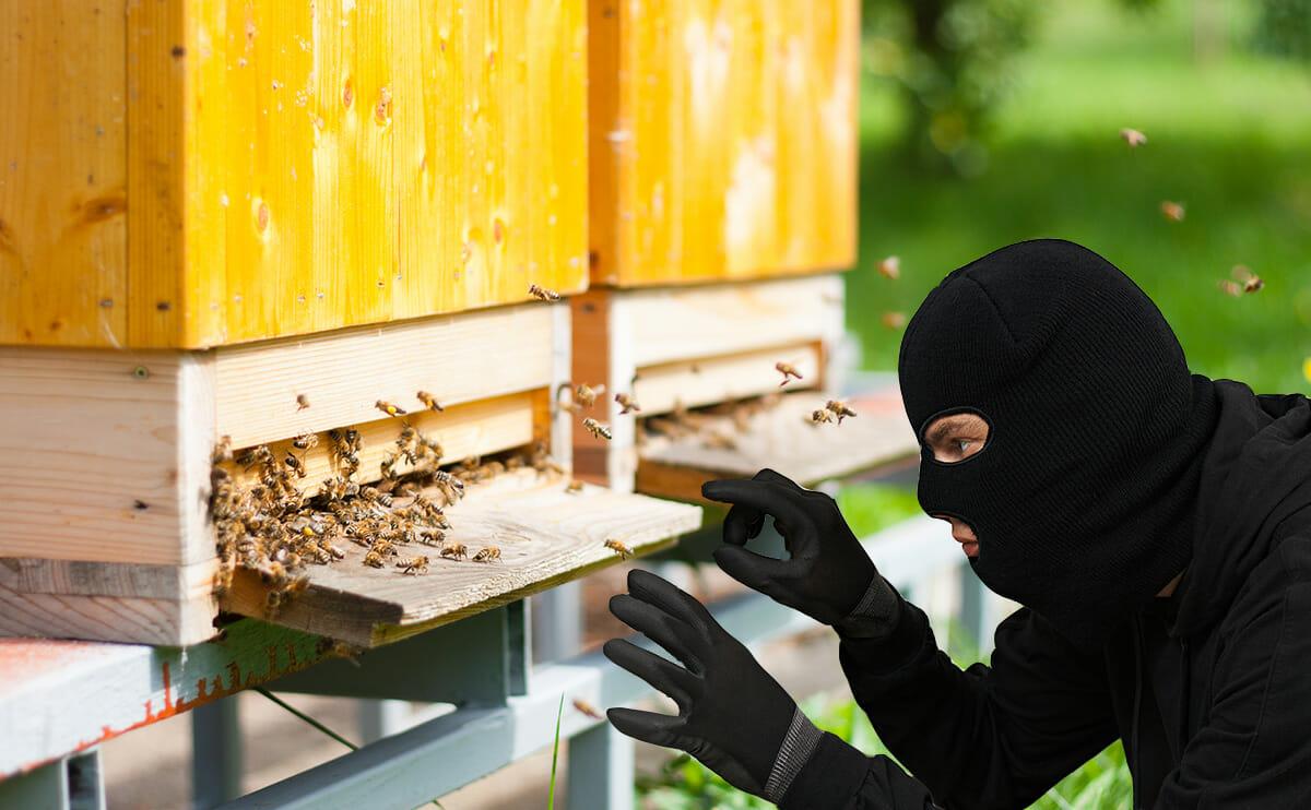 Farm Crime To Catch A Bee Rustler Modern Farmer
