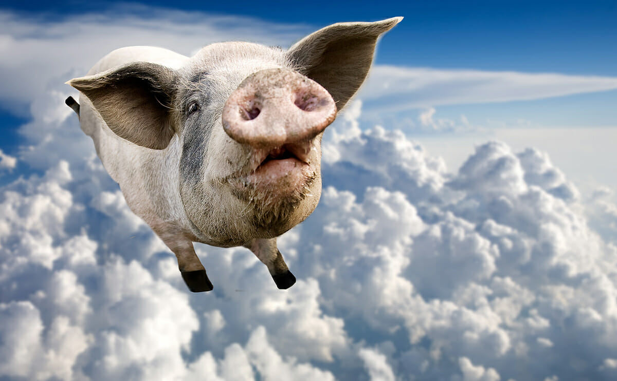 pigs flying video