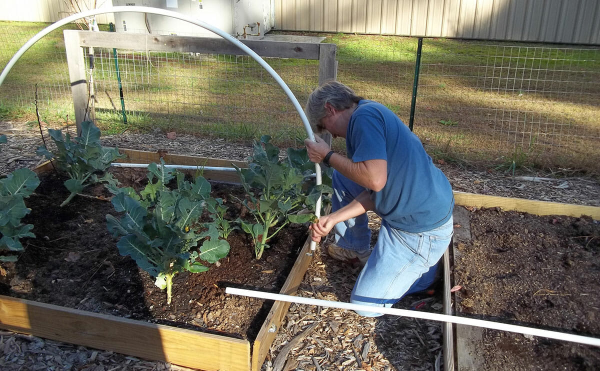 Creating A Vegetable Garden Raised Beds