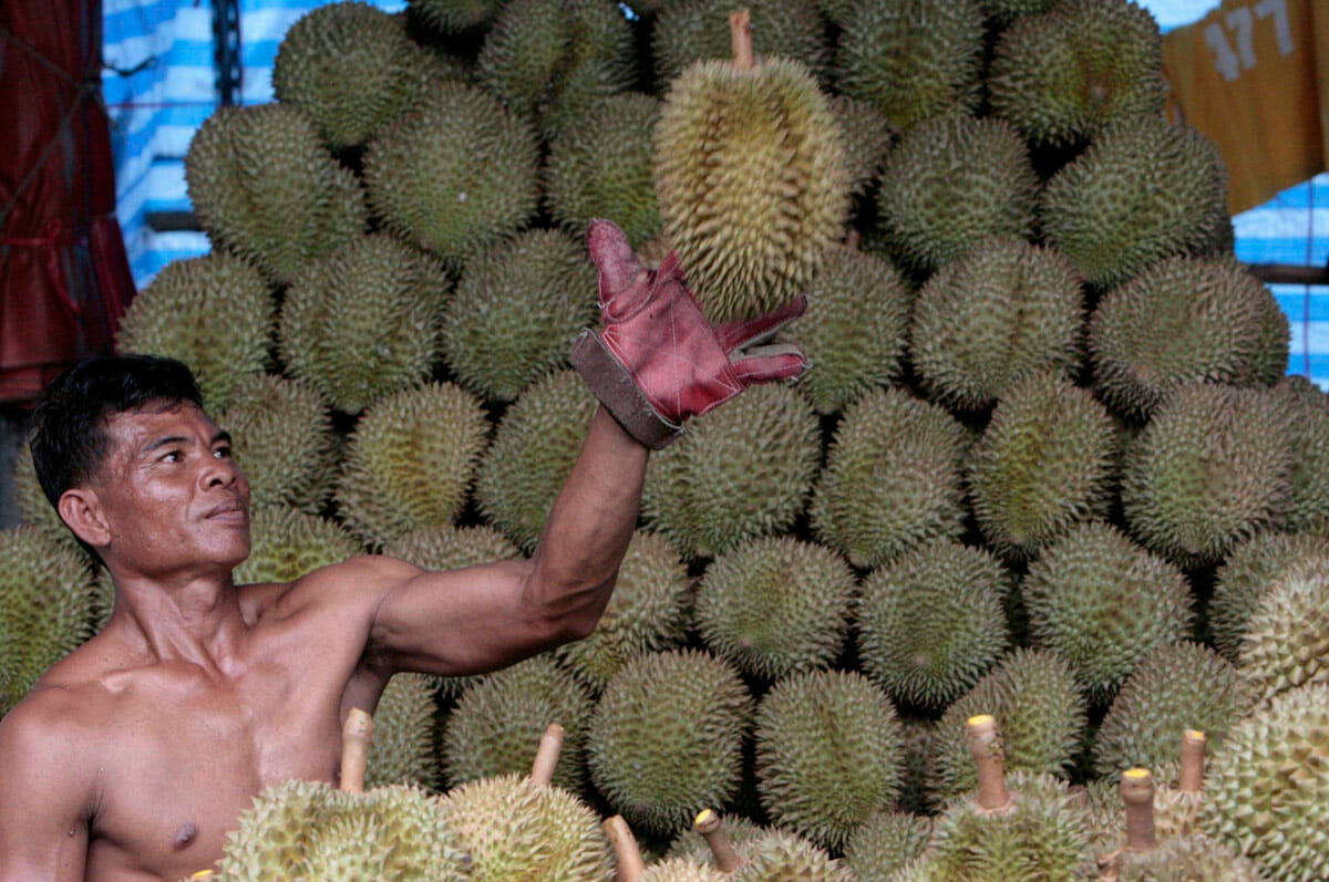 durian fruit smell and taste relationship