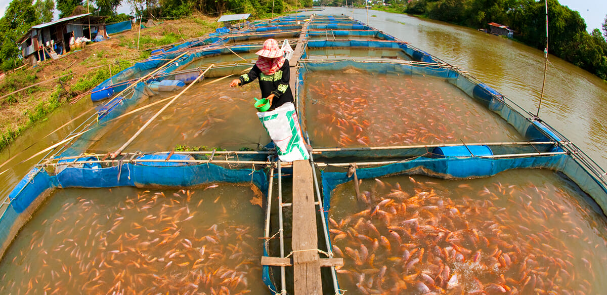 dear modern farmer is fish farming sustainable modern