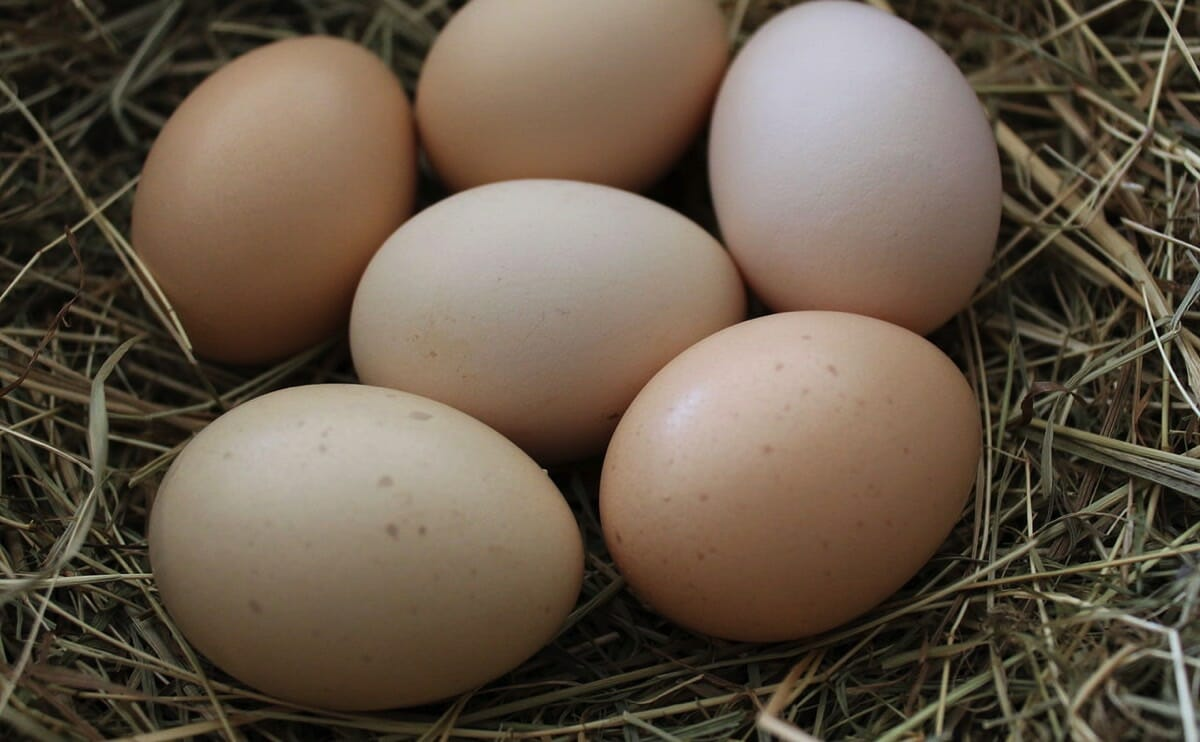 Too much choline—a compound concentrated in eggs and other animal products—can make bodily secretions smell like rotting fish, and may increase the risk of heart disease, due to conversion in the gut to trimethylamine.