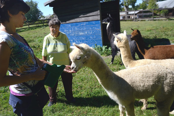 Members Aliza Koszuk (left) and Louise Kavadlo (right) of Fountain House feed alpacas.