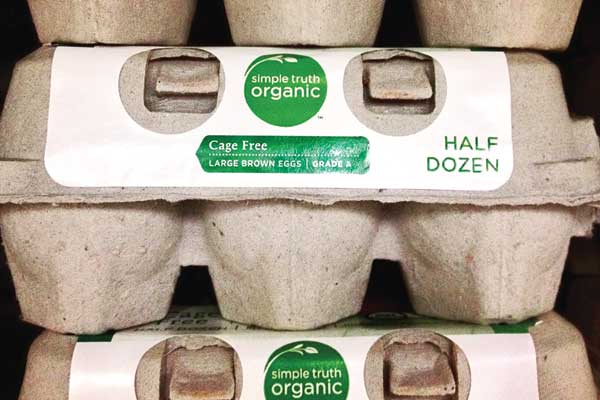 bad-news-organics-eggs