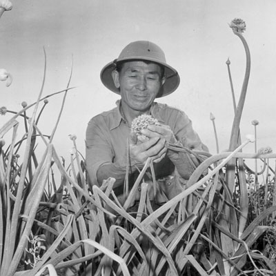 A Bitter Harvest: Inside Japanese-American Internment Camps