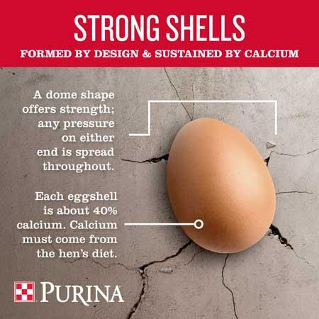 purina-infographic