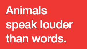 Animals Speak Louder Than Words