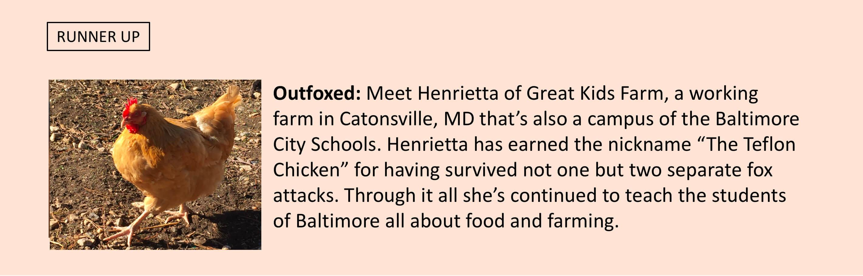 Henrietta of Great Kids Farm in Catonsville, MD