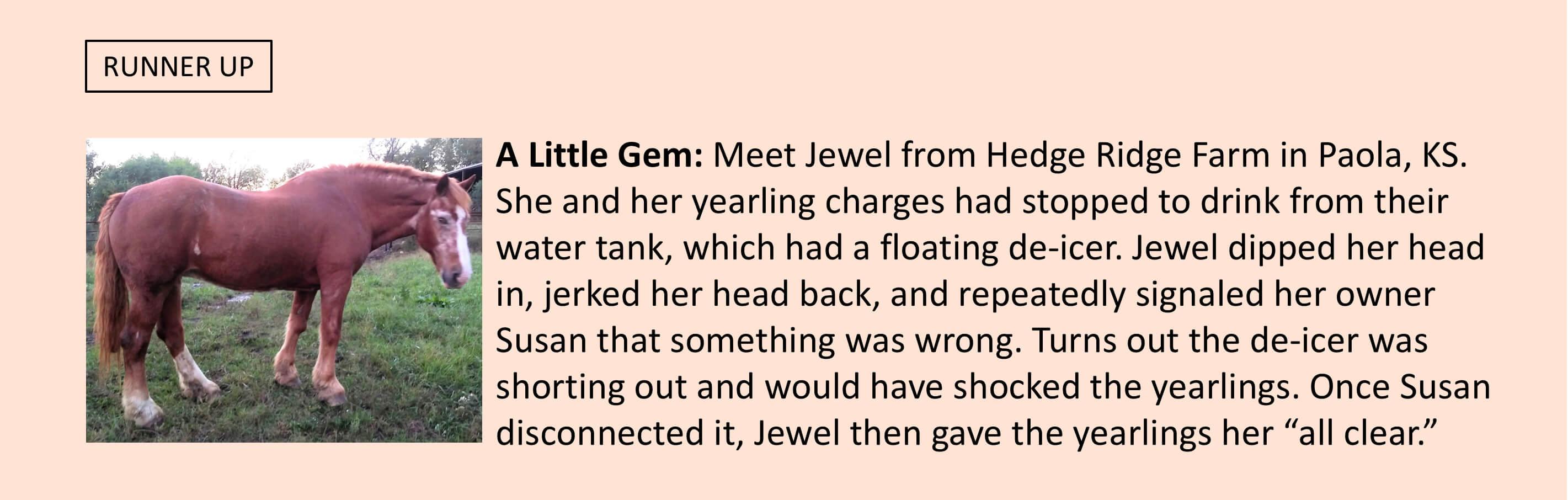 Jewel from Hedge Ridge Farm in Paola, KS