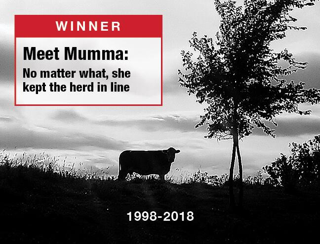 Mumma - No Matter What, She Kept the Herd In Line