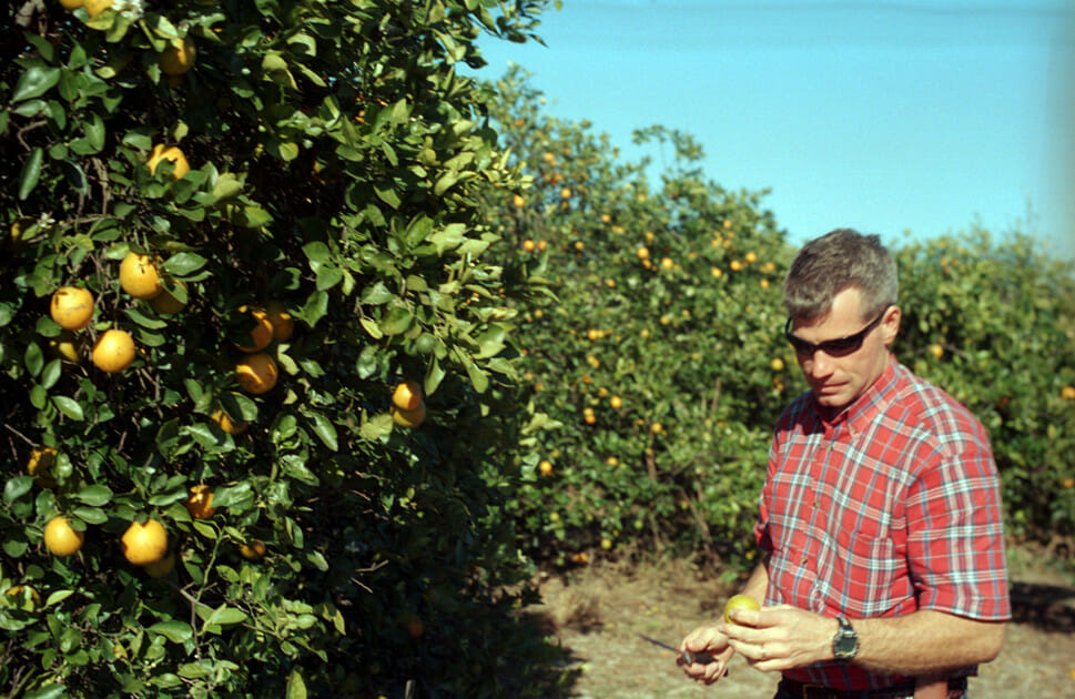 Larry Black, 39, of Fort Meade, Florida, examines a diseased fruit.