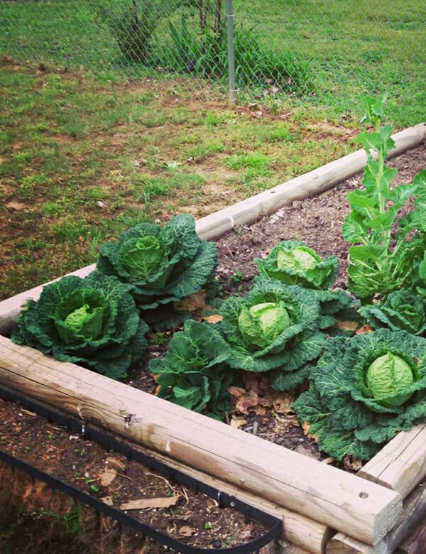 http://modernfarmer.com/wp-content/uploads/2013/04/Hollis_Garden_crop.jpg