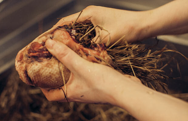 A duck being stuffed with hay.