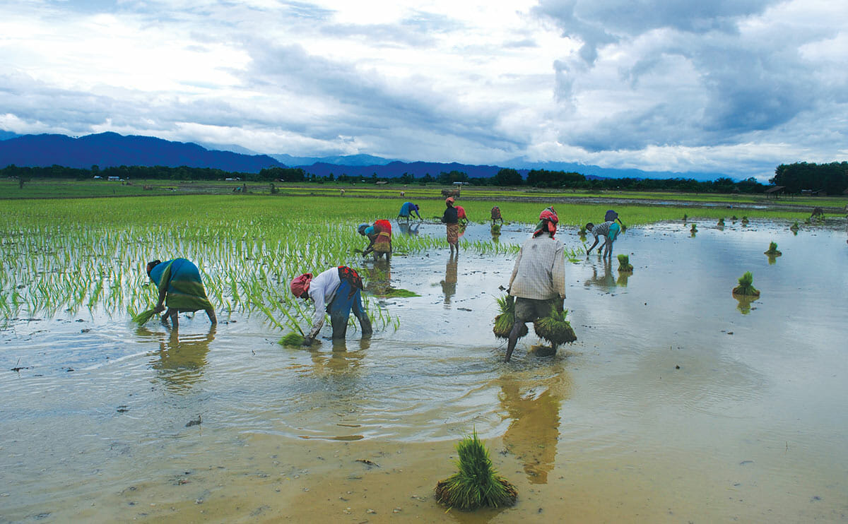 Monsoon Season Finale | Modern Farmer