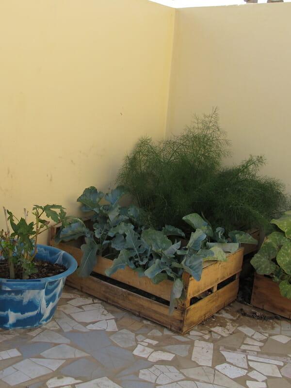 http://modernfarmer.com/wp-content/uploads/2013/04/senegal_garden_crop.jpg