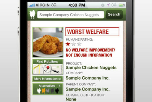 Buying Chicken