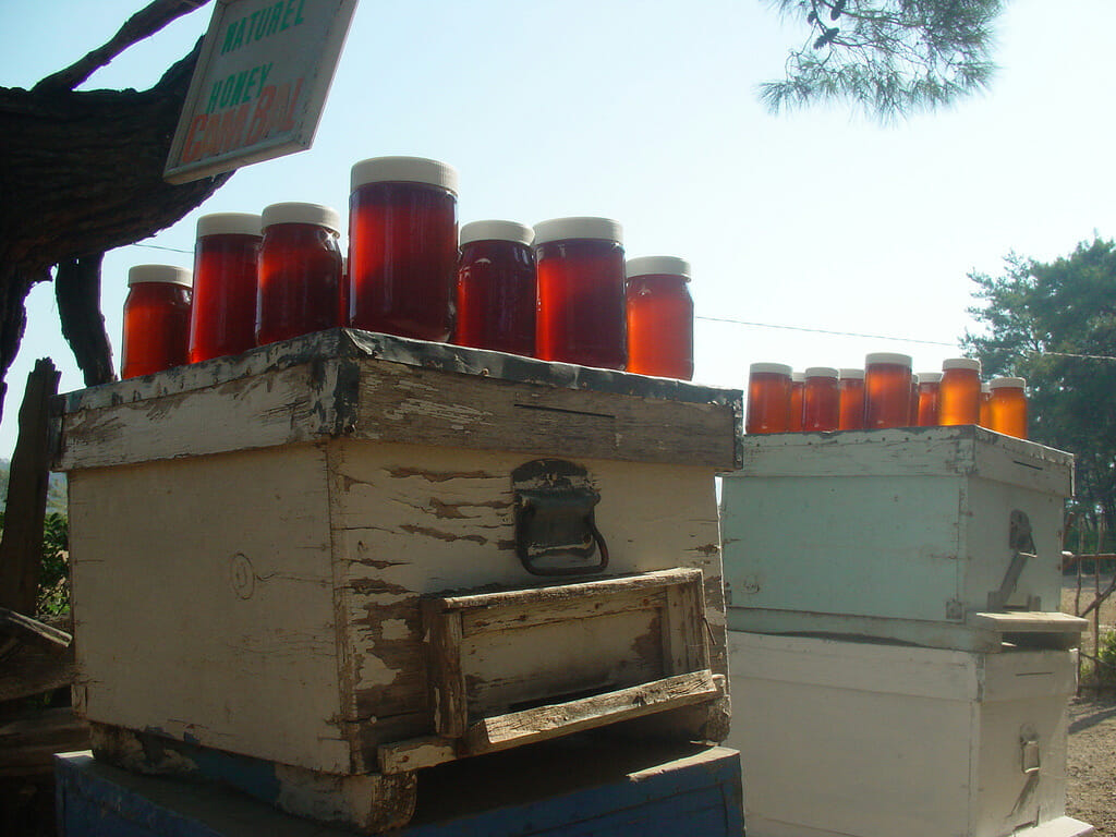 Turkish pine honey in the Mugla province where much of it is produced. PhotoCharlesFred