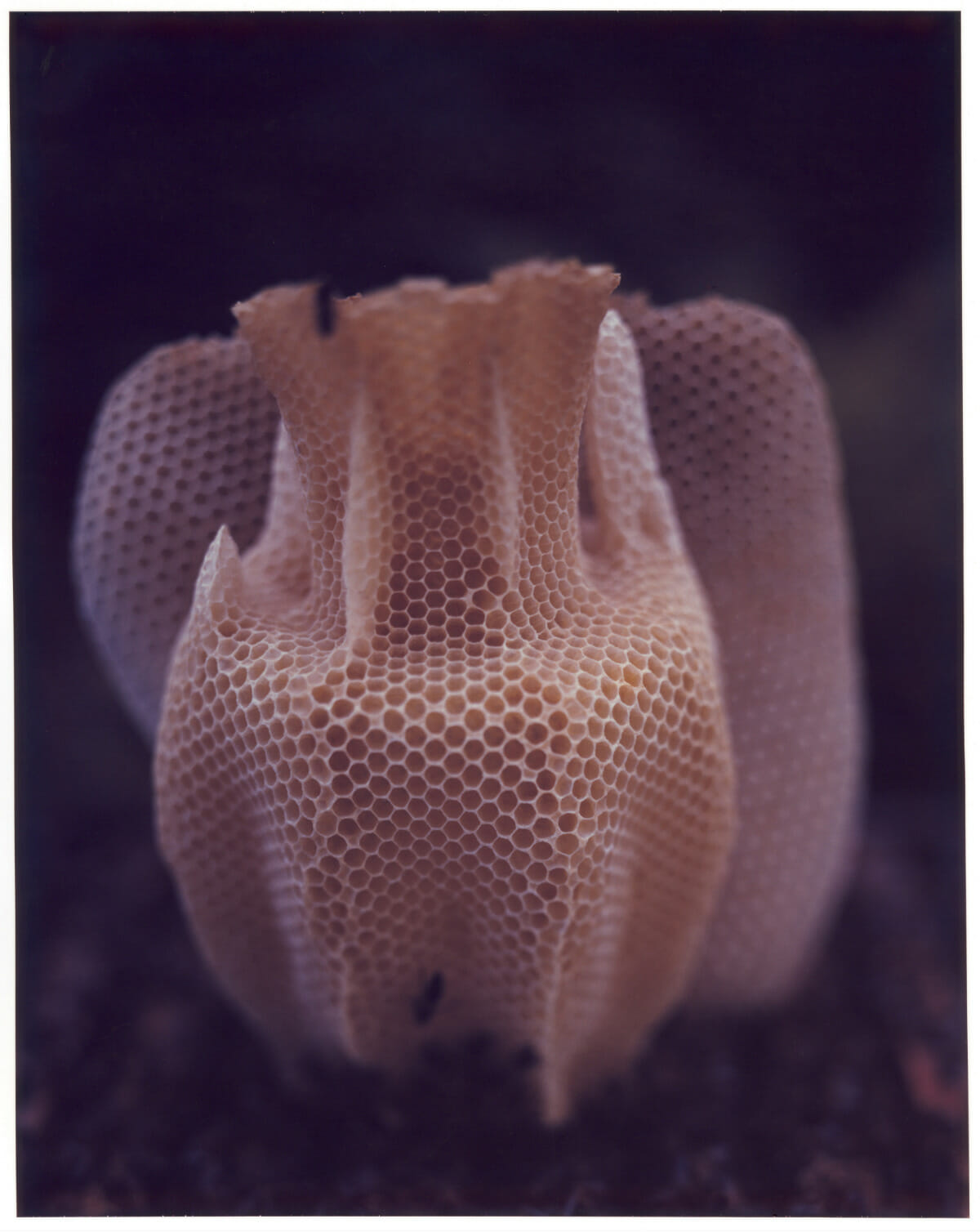 The Honeycomb Vase / Credit: Raoul Kramer