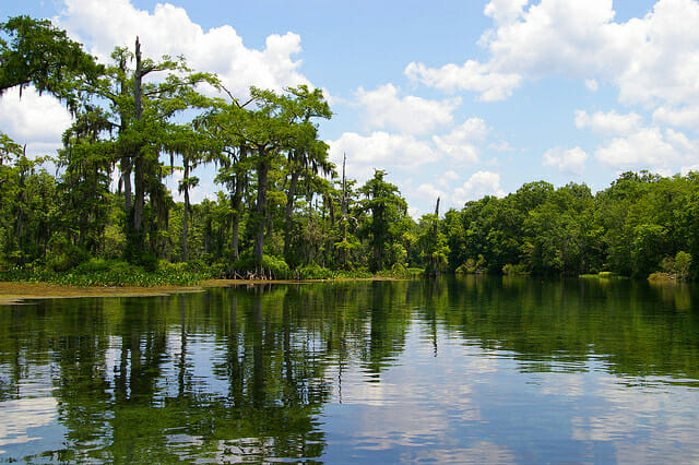 The Apalachicola River Photo:jonu235