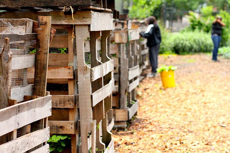 A Garden Grows in Cabrini-Green - Modern Farmer
