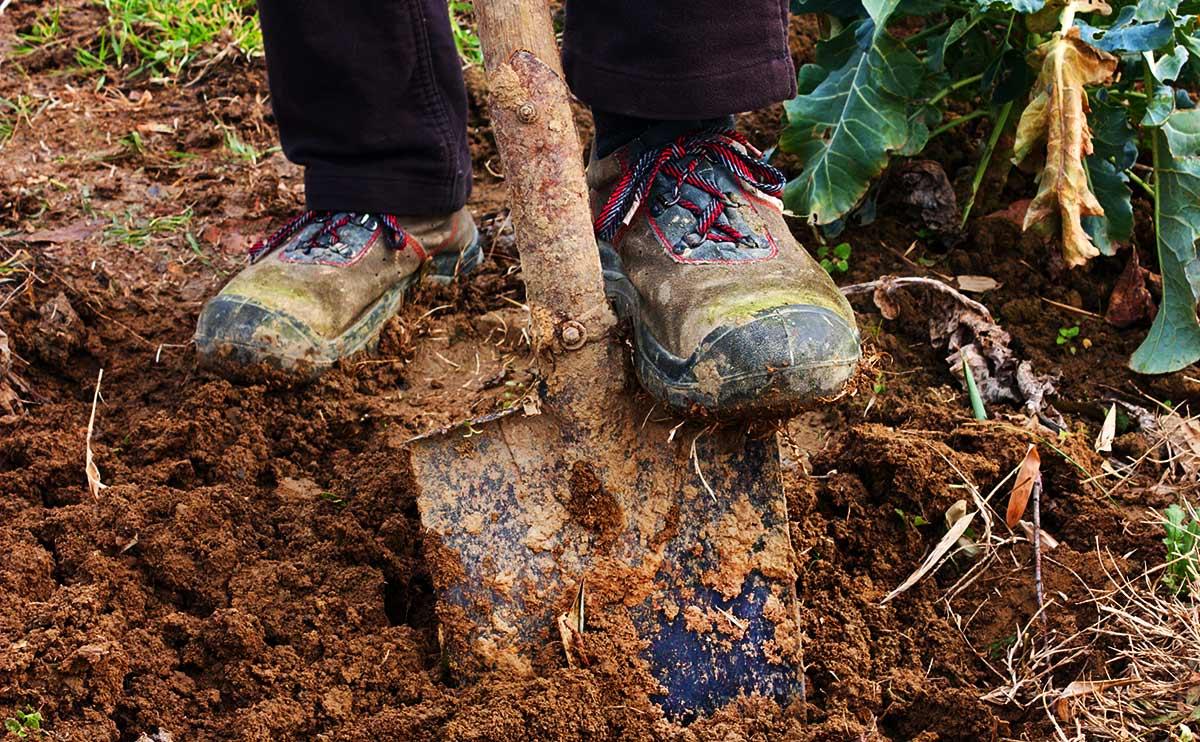 3133b14d53860 Dear Modern Farmer  Did I Dig All Wrong  - Modern Farmer