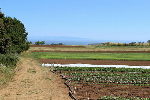 Fields overlooking the ocean at the Center for Agroecology and Sustainable Food Systems at the University of California, Santa Cruz.