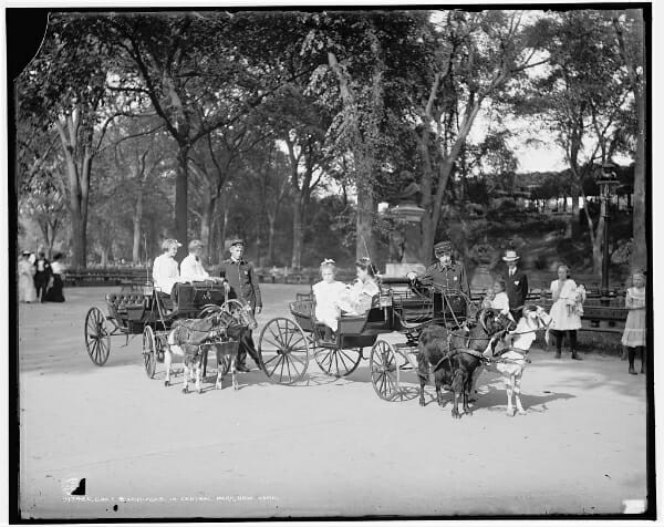 Goat carriages in Central Park (technically not a farm photo, but c'mon people. GOATS.)