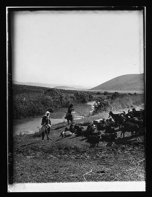 Liberian Goatherders